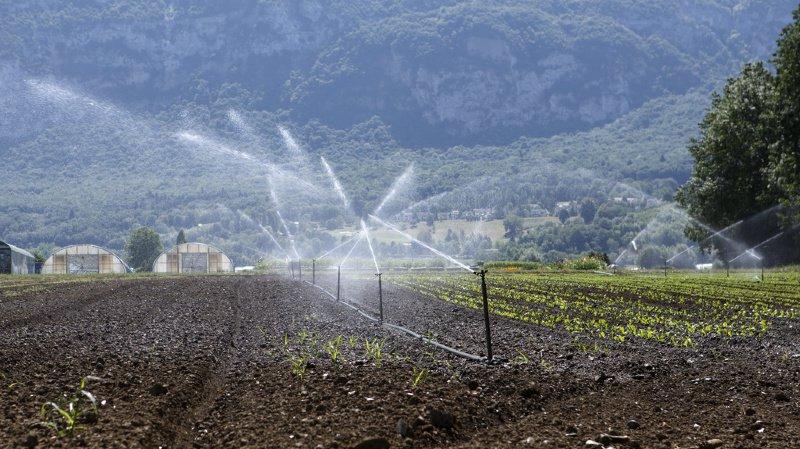 Changement climatique: l'irrigation atténue les extrêmes liés au réchauffement